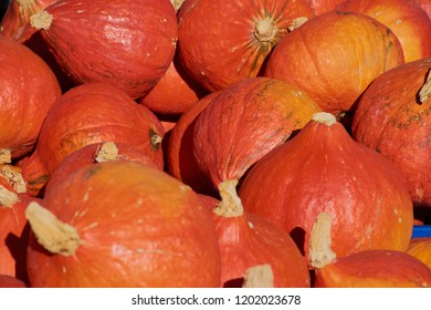 lots of orange hokkaido pumpkins, Red kuri squash background
