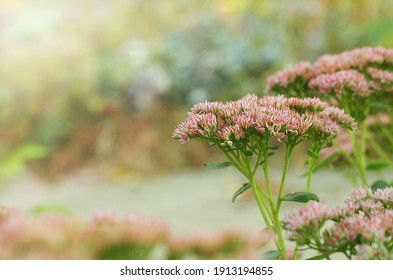 Lots of pink flowers. Back focus Spring screensaver, notebook cover, spring background, picture for printing.Delicate bokeh.Copy space