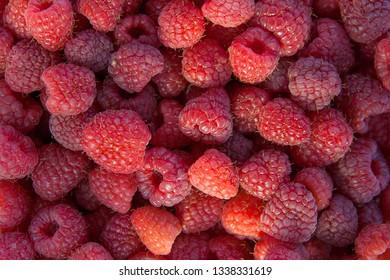 Lots of red ripe raspberries as background. Close up of fresh organic sweet berries.