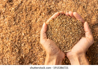 Lots of sawdust or wood chips in a man's hand. - Shutterstock ID 1915386721