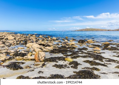 Lots of seaweed between rocks