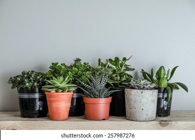 lots of succulent plants indoors