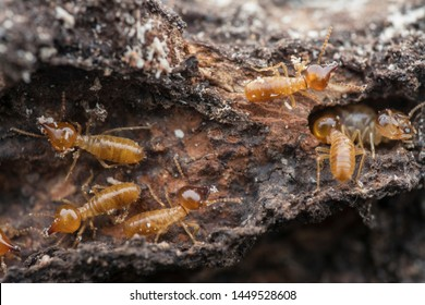 lots of termite on the dried or dead treebark