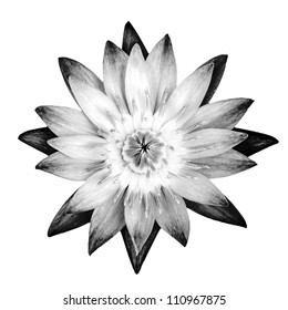 lotus in black and white tone