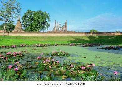 Lotus blooming in the morning at Sukhothai historical park Thailand