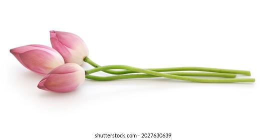 Lotus buds. Lotus flower is Vietnamese national flower.