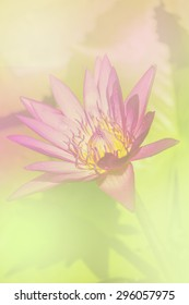 the lotus a color adjustment in soft style for background and text