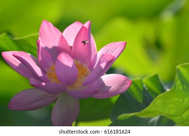 Lotus cool beautiful Beautiful scenery Beautiful scenery  outdoor  park  green  color spring  Spring is coming  pleasant