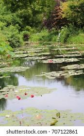 Lotus flower blooming on a lake