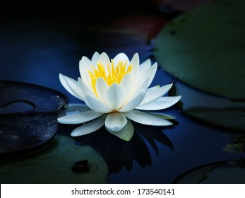 Lotus flower blooming on a quiet pond. impressional style.