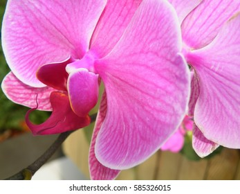 Lotus flower close up. Blossom.