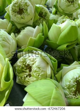 Lotus Flower Folding Stock Photo Edit Now 672467206 Shutterstock