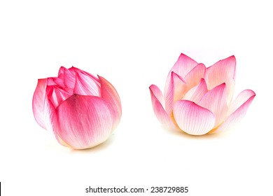 Lotus petals images stock photos vectors shutterstock lotus flower is a important symbol in asian culture mightylinksfo