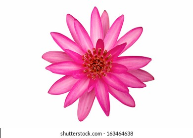 Lotus flower. isolate on white background.