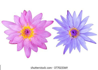 lotus flower isolated on white background with clipping path