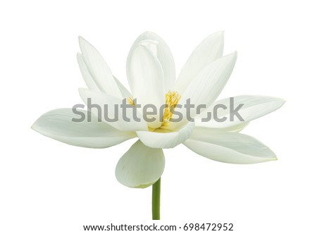 lotus flower isolated on white background の写真素材 今すぐ編集