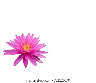 lotus flower isolated white background beautiful nature With clipping path