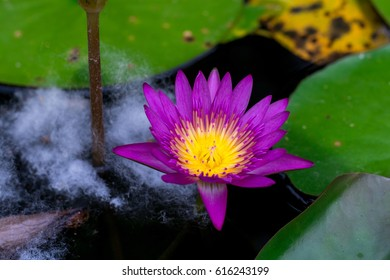 Lotus flower meaning images stock photos vectors shutterstock lotus flower meanings on pinterest thailand travel the lotus flower represents one symbol of fortune in mightylinksfo Choice Image