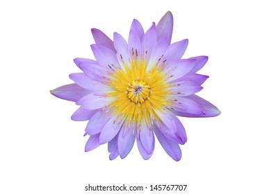 Lotus flower on isolate background