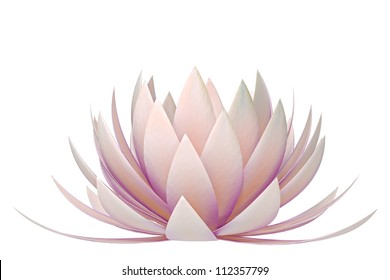 lotus flower on a white background