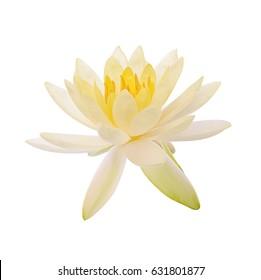 White lotus flower images stock photos vectors shutterstock lotus flower and lotus flower plants isolated on white mightylinksfo