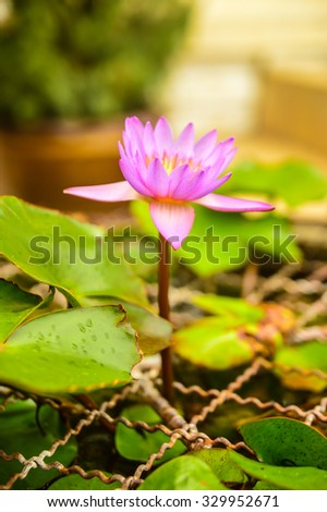Lotus Flower Represents Peace Stock Photo Edit Now 329952671