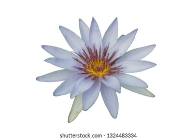 Lotus flower stamen lotus white background