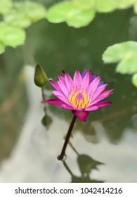 Lotus flower symbol rebirth sun stock photo edit now 1042745386 lotus flower symbol of rebirth and the sun mightylinksfo