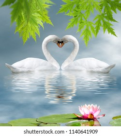 lotus flower and two swans as a symbol of love