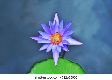 Lotus flower meaning in buddhism images stock photos vectors lotus flower is very meaningful in buddhism it describe about human behaviors and mind mightylinksfo