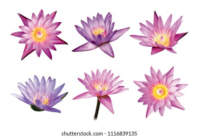 Lotus flowers isolated on white background