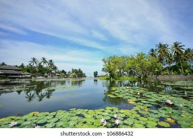 Lotus Lagoon in Candidasa, Bali
