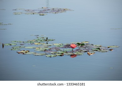 Lotus with leaf in lake