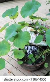 lotus leaves in a bowl