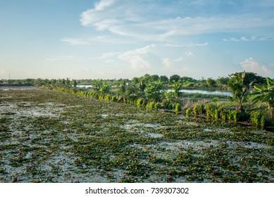 Lotus marsh and wood boat with sky background at Banglane, Nakorn pathum, Thailand.