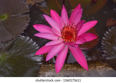 Names of Plants That Grow in Water Images, Stock Photos & Vectors