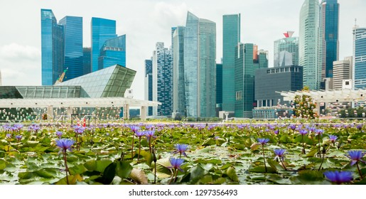 Lotus on the background of skyscrapers in Singapore panorama