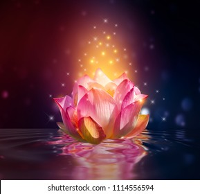 lotus Pink floating light sparkle purple background