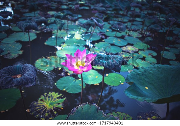 Lotus pond and Pura Saraswati temple (Ubud Water Palace) in Ubud, Bali, Indonesia.