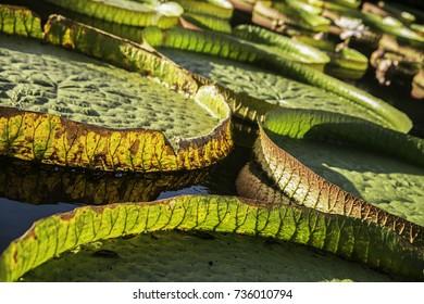 Lotus pond Taiwan