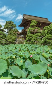 Lotus pond of the Zenko-ji temple
