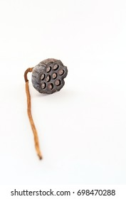 Lotus seeds dry on white background