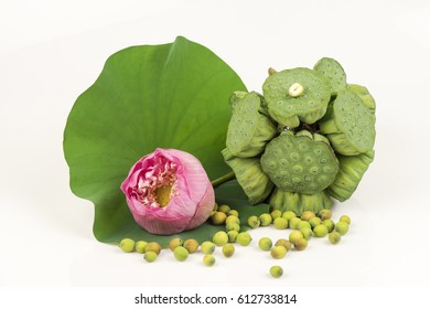Lotus seeds or lotus seeds have properties medicine.