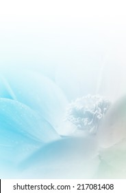 Lotus in soft color and blur style