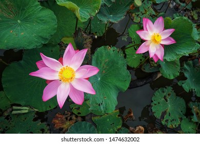 Lotus is a type of tropical water lily with large, flat leaves that float on the surface of lakes and pools. In Buddhism, the lotus represents purity and is a symbol of reincarnation and rebirth.