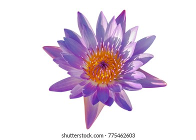 Lotus ultra violet, Isolated