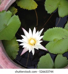 Lotus with water drop
