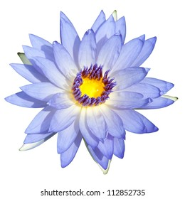 Lotus or Water lily isolate in the white background