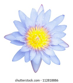 Lotus or waterlily flower isolated