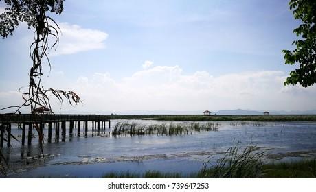 Lotus wetlands